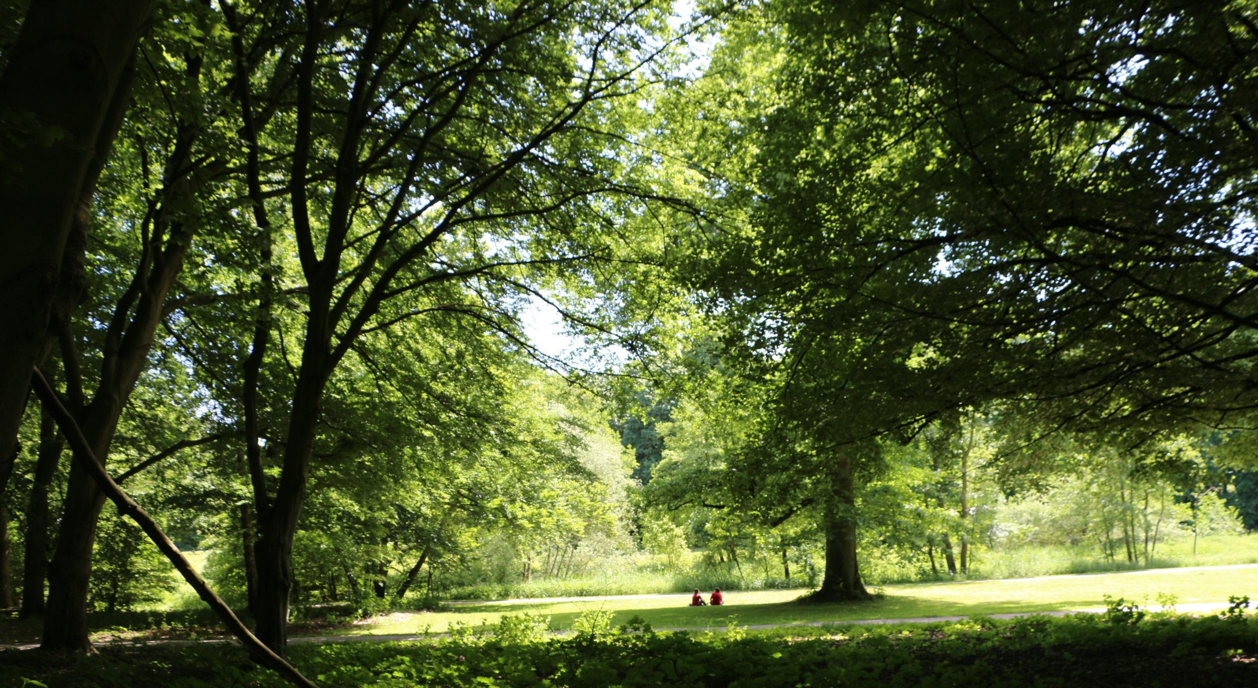 Achtsamkeit im Wald